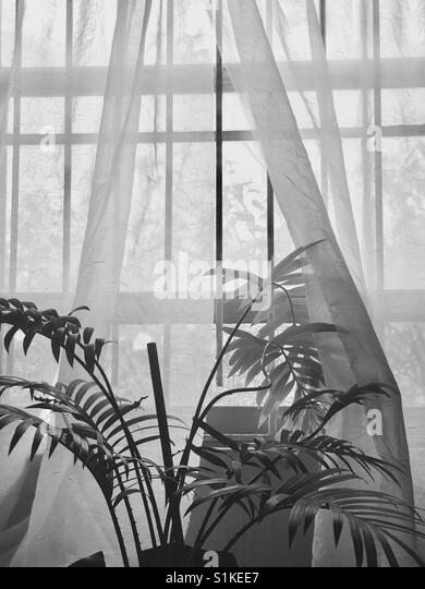 Handfläche aus Fenstervorhänge Stockbild