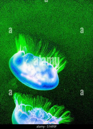 Quallen-Foto geben einen Neo-retro-Look.  Grün, weiß und blau leuchtenden Farben Alien wie Quallen Stockbild
