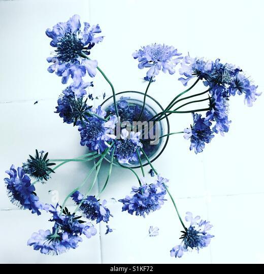 Für die gepflückten Blumen. Stockbild