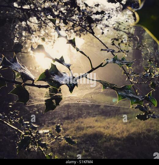 Heiligen Busch am Morgen Stockbild