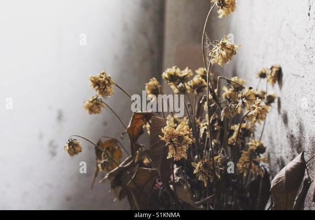 Pflanzen verwelken Stockbild