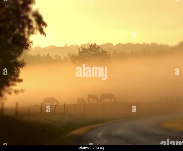 Landwirtschaft Pferde Stockbild