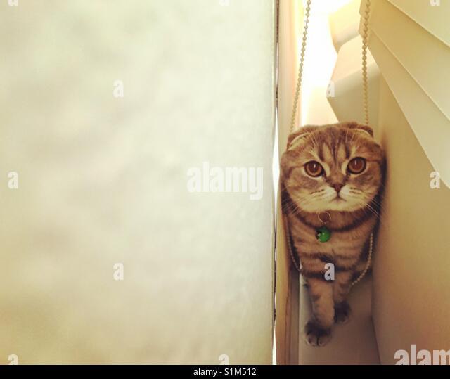 Eine Katze, die in den engen Ecken Stockbild