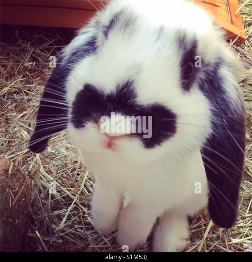 Cute bunny Kaninchen Stockbild