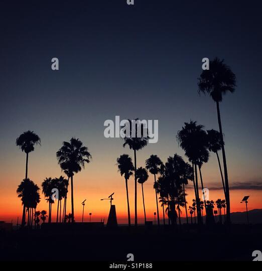 Sonnenuntergang über Palmen auf der Venice Beach, Los Angeles, Kalifornien, USA Stockbild
