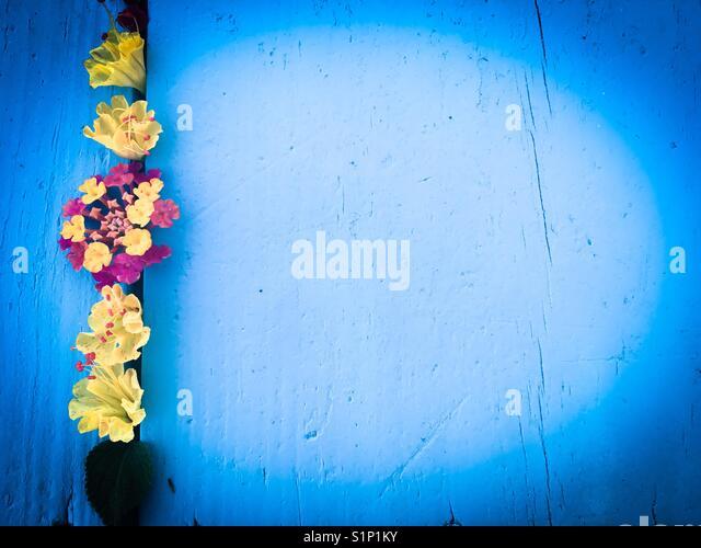 Blume Flach, Hintergrund Stockbild