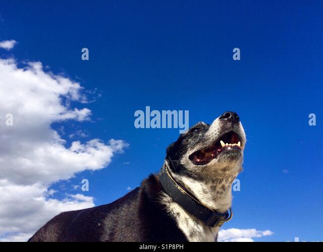 Pet portrait Stockbild