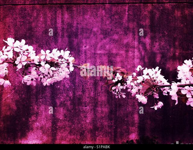 Zwei Zweige in der Blüte Stockbild