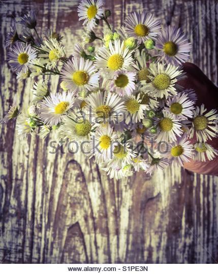Gänseblümchen Blumenstrauß Stockbild