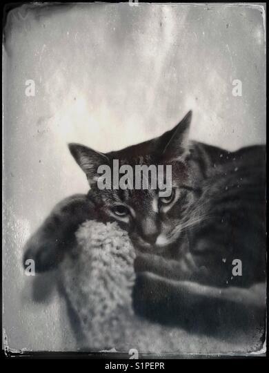 Grumpy tabby cat Stockbild