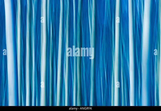 Resumen de árboles, el Parque Nacional de Jasper, Alberta, Canadá. Imagen De Stock