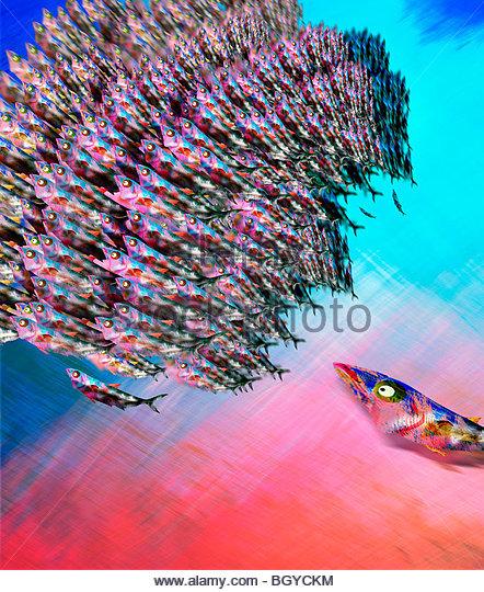 Predador persiguiendo escuela de peces Imagen De Stock