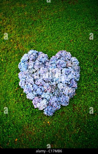 Corazón púrpura Imagen De Stock
