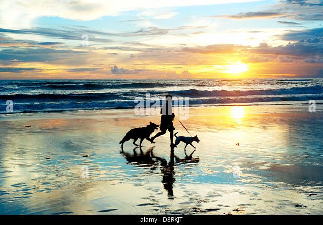 Hombre con un perro corriendo por la playa al atardecer. La isla de Bali, Indonesia Imagen De Stock