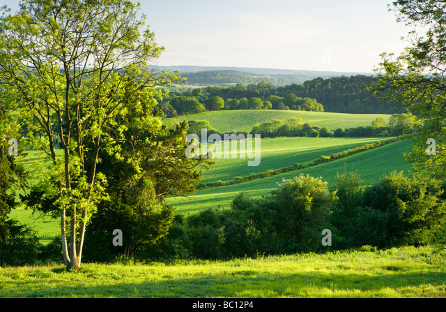 Vue sud de North Downs à Newlands Corner, Surrey, UK Photo Stock