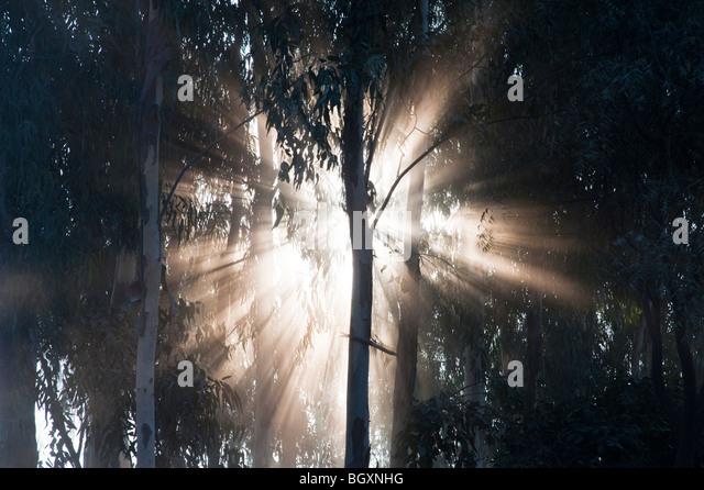 Sunburst à travers des arbres en Inde, Silhouette Photo Stock
