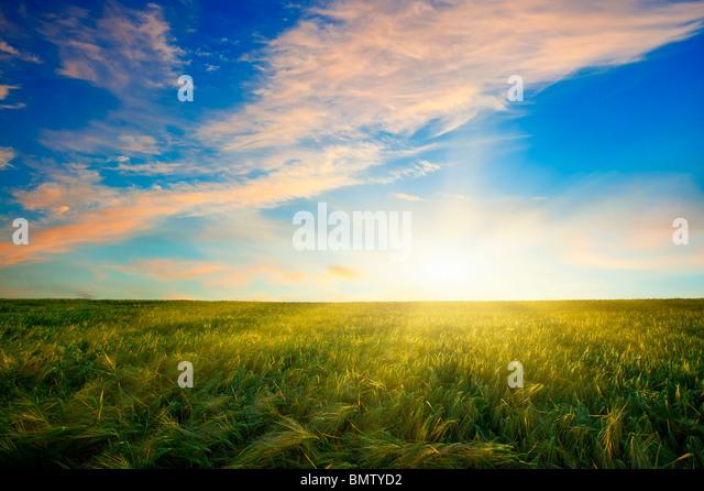 Coucher de soleil sur champ de blé Photo Stock