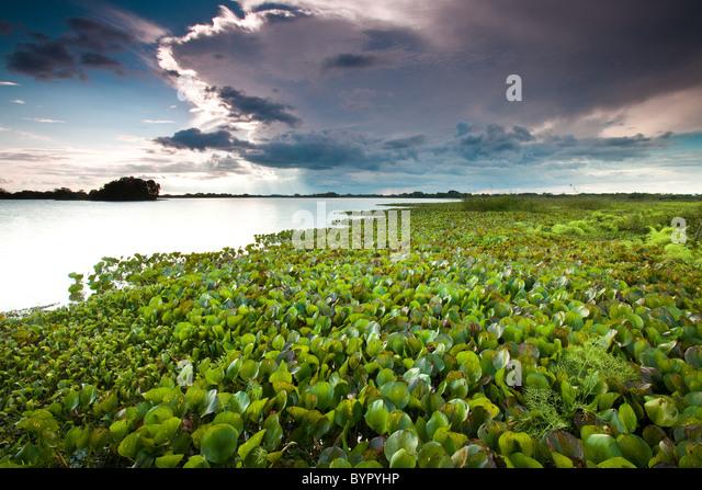 Au bord de lac de Refugio de Vida Silvestre Cienaga de las Macanas Nature Reserve, dans la province de Herrera, Photo Stock