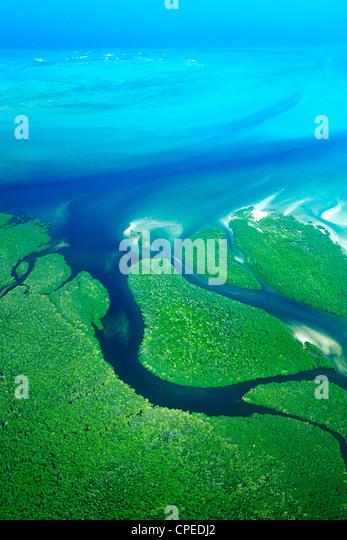Les mangroves le long de la côte de la Parc National des Quirimbas au Mozambique. Photo Stock