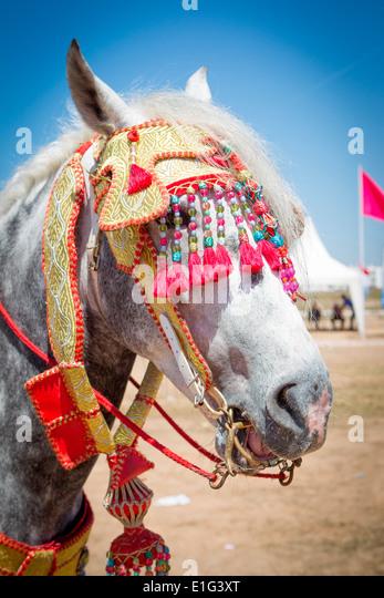 Détail de l'arabe à la décoration traditionnelle de chevaux Barb fantasia près de Rabat Photo Stock