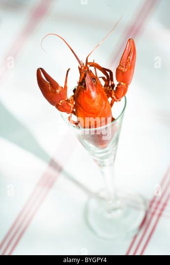 Gamberi di fiume in vetro Immagini Stock