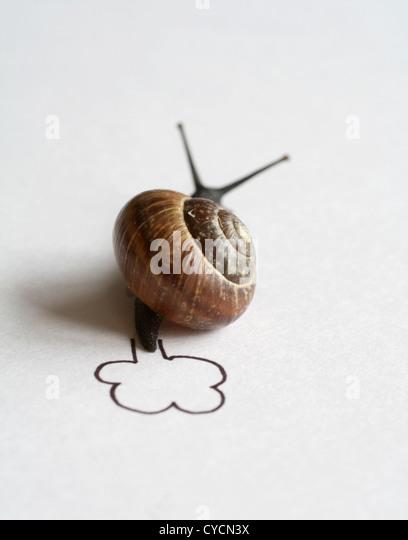 Snail,passo di lumaca,gara di lumaca Immagini Stock