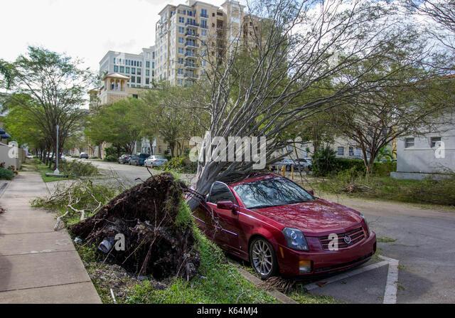 Miami, Florida, Stati Uniti d'America. Undicesimo Sep, 2017. Un auto è schiacciata sotto un albero sradicato Immagini Stock