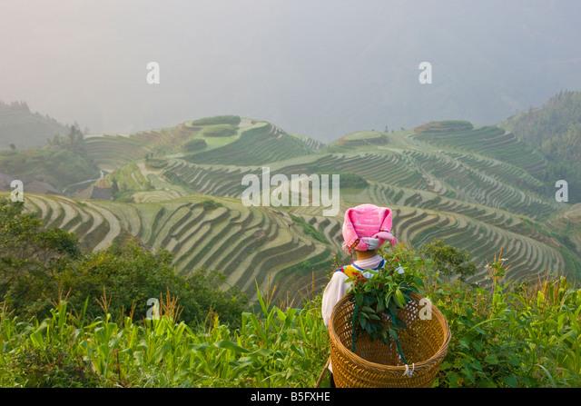 Cesta de transporte menina Zhuang com terraços de arroz Longsheng Guangxi China Imagens de Stock