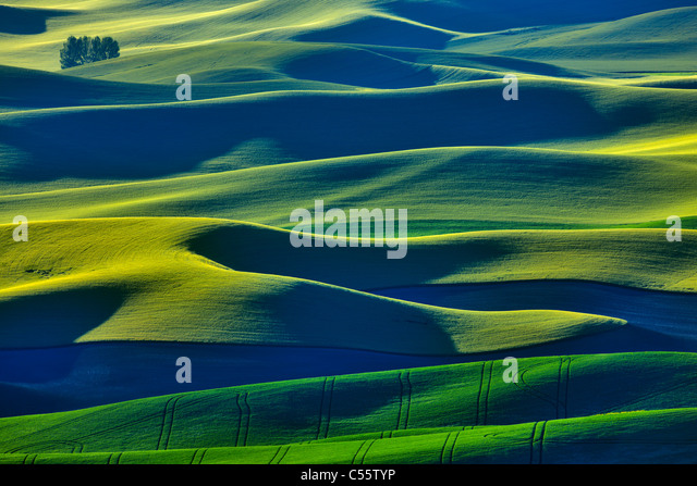 Grande ângulo de vista de campos verdes, Steptoe Butte, Palouse, no Estado de Washington, ESTADOS UNIDOS DA Imagens de Stock