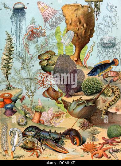 A vida no mar, incluindo crustáceos e moluscos. Imagens de Stock